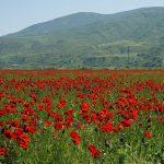 Деоккупация Карабаха внесет свой вклад в развитие ВИЭ в Азербайджане — Минэнерго
