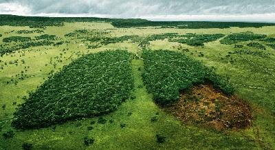 TAP karbon emissiyasını azaldaraq daha təmiz enerji mənbəyini təmin edəcək